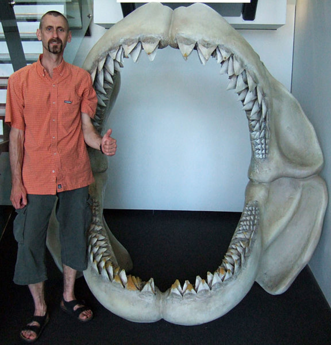top-4-theories-about-what-caused-megalodons-extinction