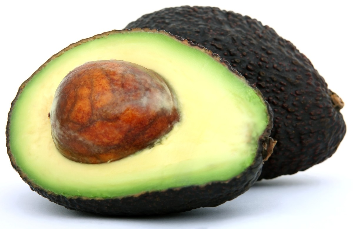 Grow an Avocado Tree from a Seed