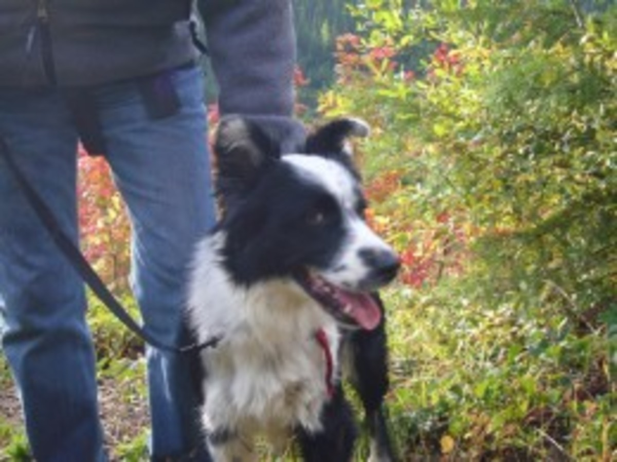 The Author with her Border Collie, Skye