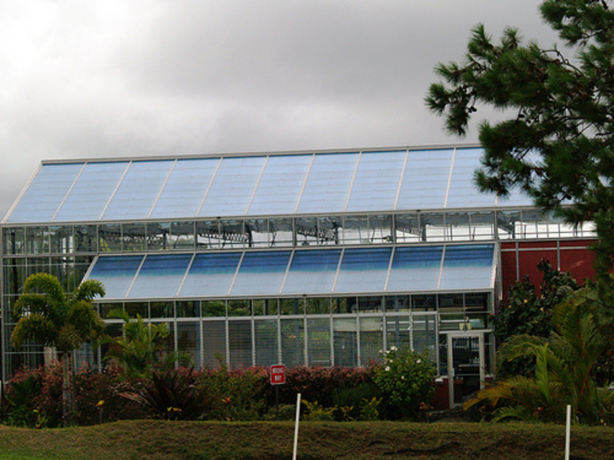 Solar Panels on a Greenhouse in Hawaii
