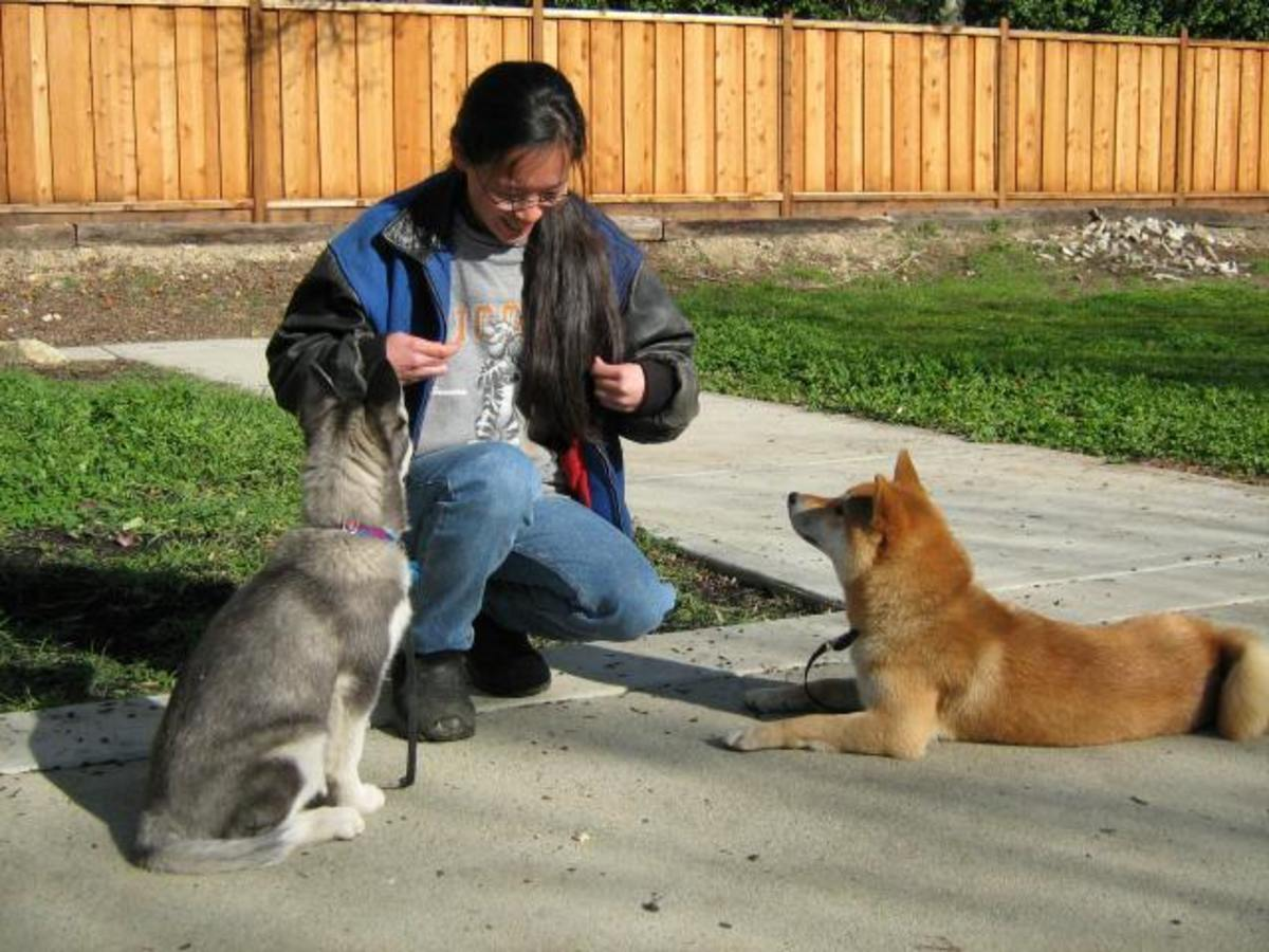 It can be dangerous and detrimental to your dog, to follow techniques that you see on Cesar Millan's show, without first doing thorough research of your own.