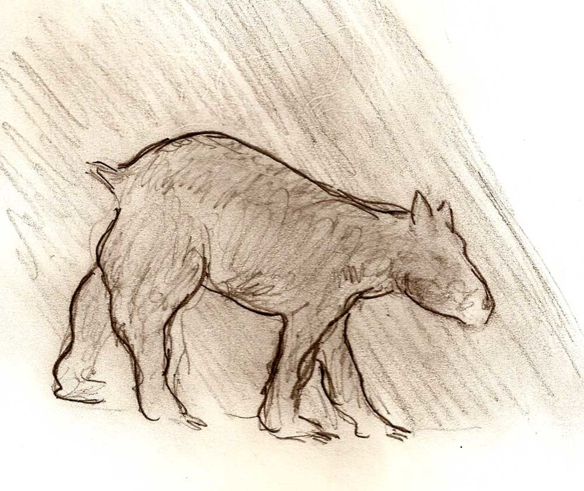 A sketch of the animal seen at night crossing Manor Road in Baltimore County.