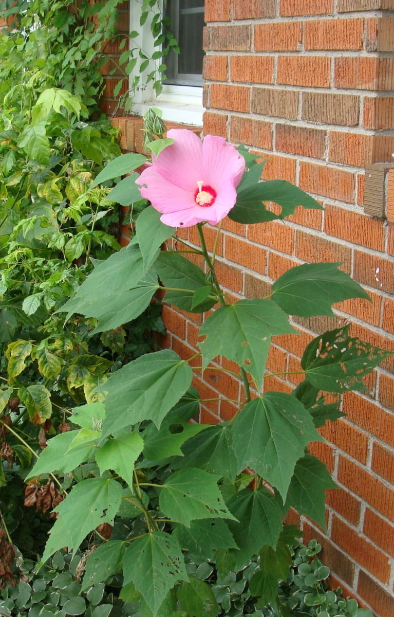 hubmob-weekly-topic-kentucky-springtime-wildflowers