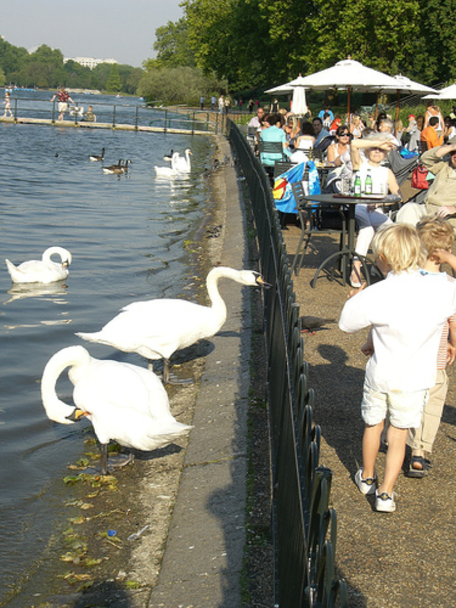 Children, families and swans next to the Serpentine, Hyde Park. Copyright Frank Wales @ Flickr