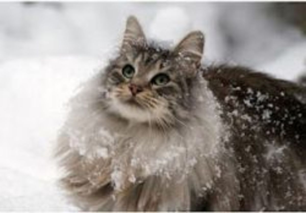Long fur for the snow