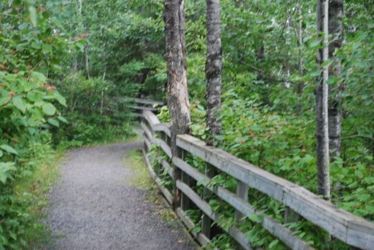 Oberholtzer Trail at Rainy Lake Visitor Center