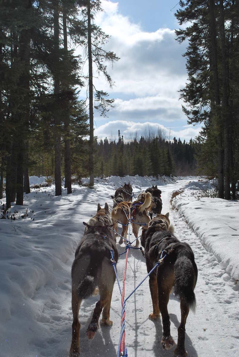 Dog Sled Exploring!