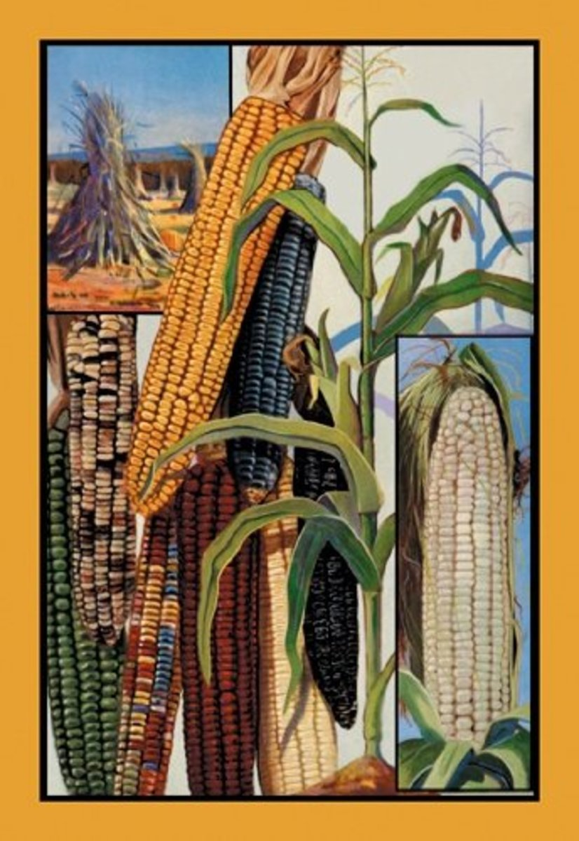Indian Corn Print