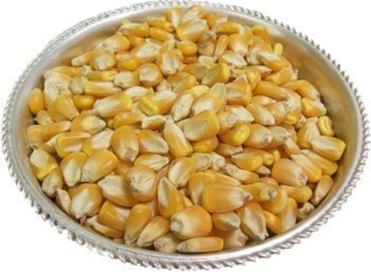 Plate of Kernels Corn