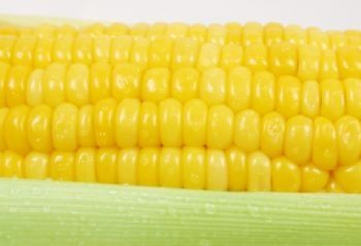 Eating Corn on the Cob