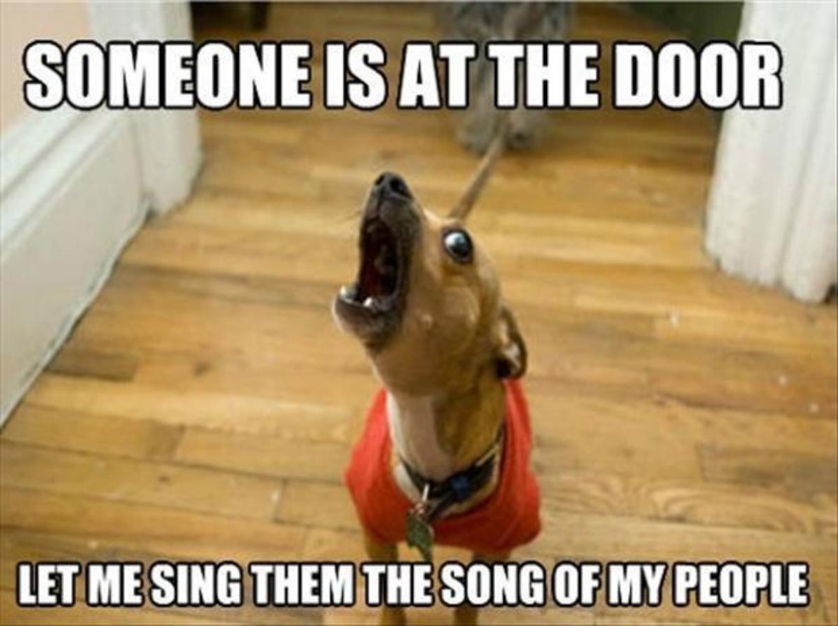 funny-dog-doormats