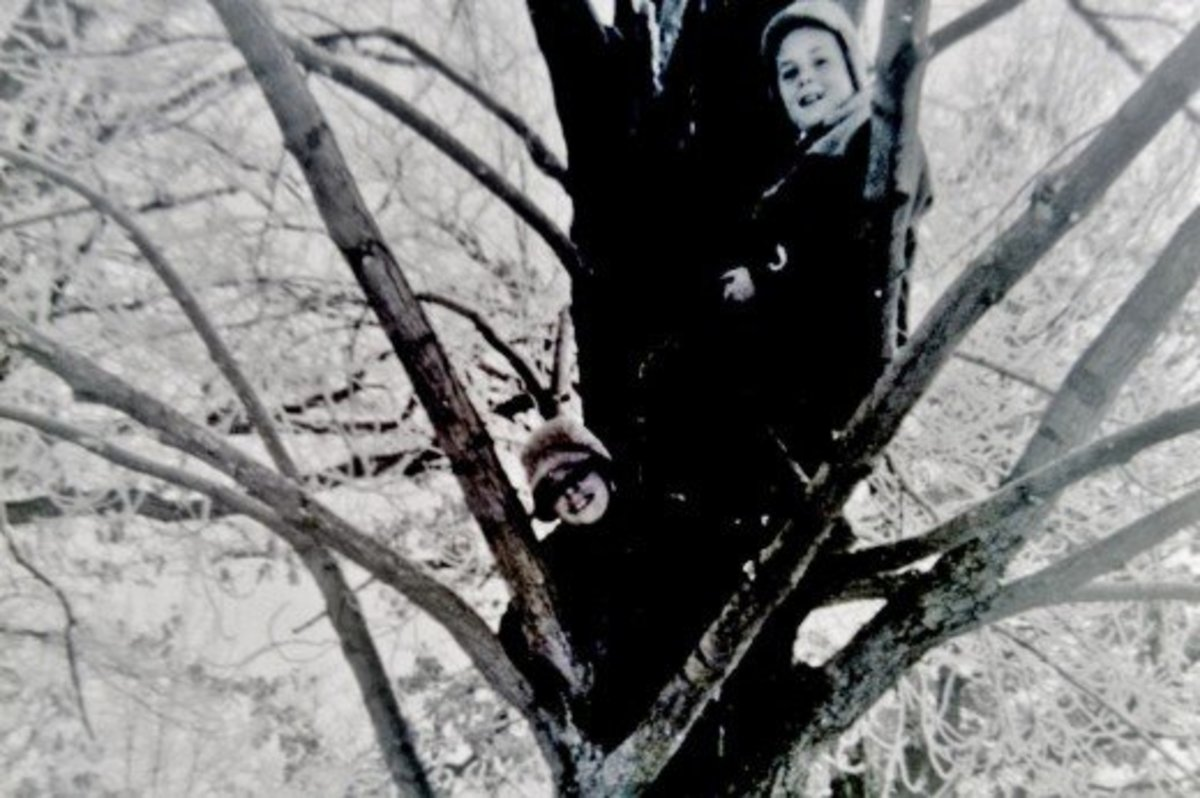 Pictures of my brothers climbing trees in the Wisconsin wintertime.