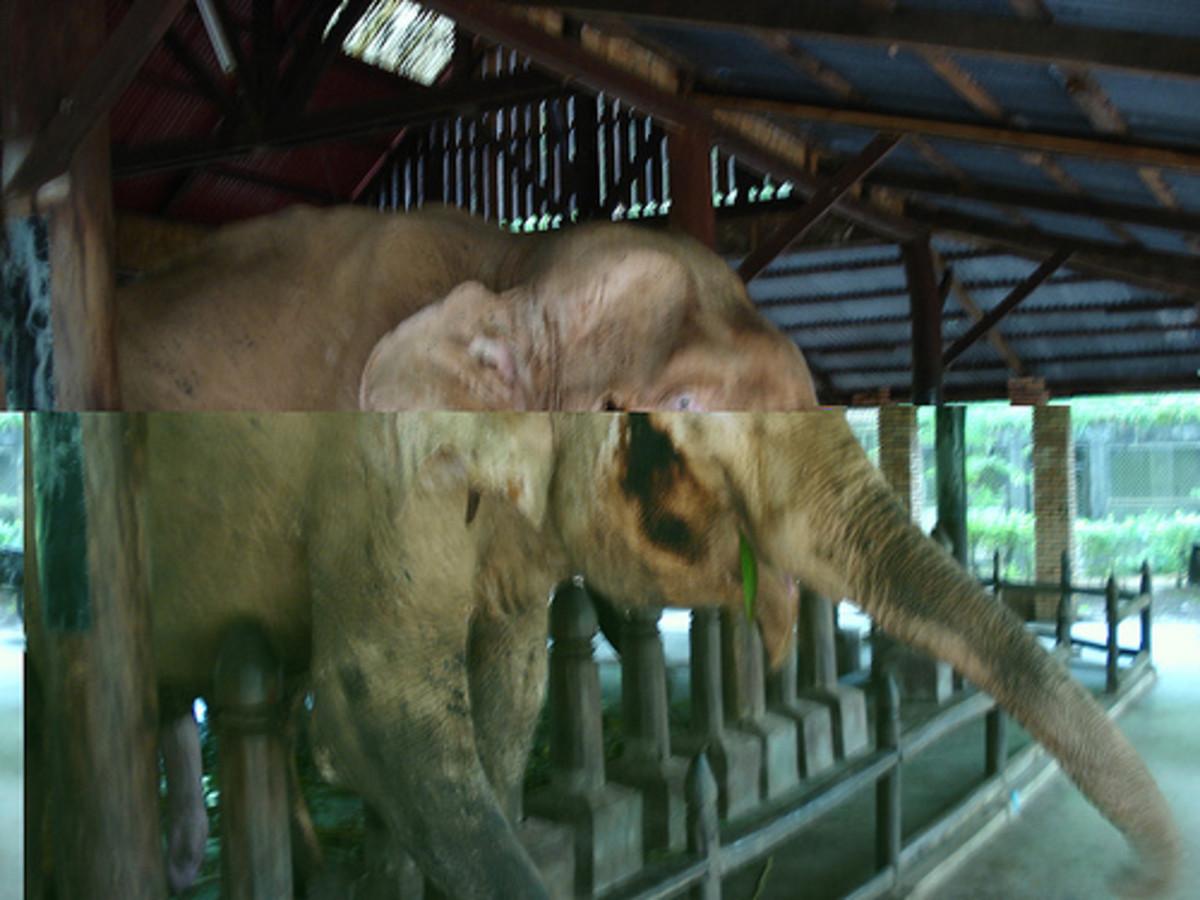 vientiane-zoo