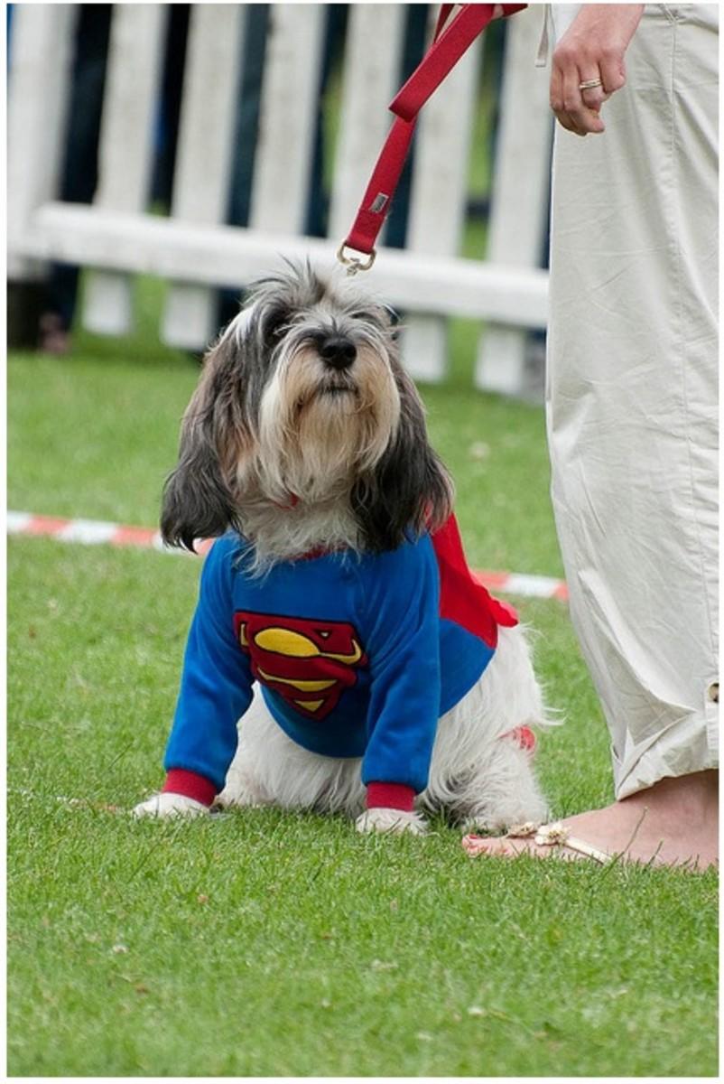 Halloween fancy dress for dogs homemade amp diy costume ideas