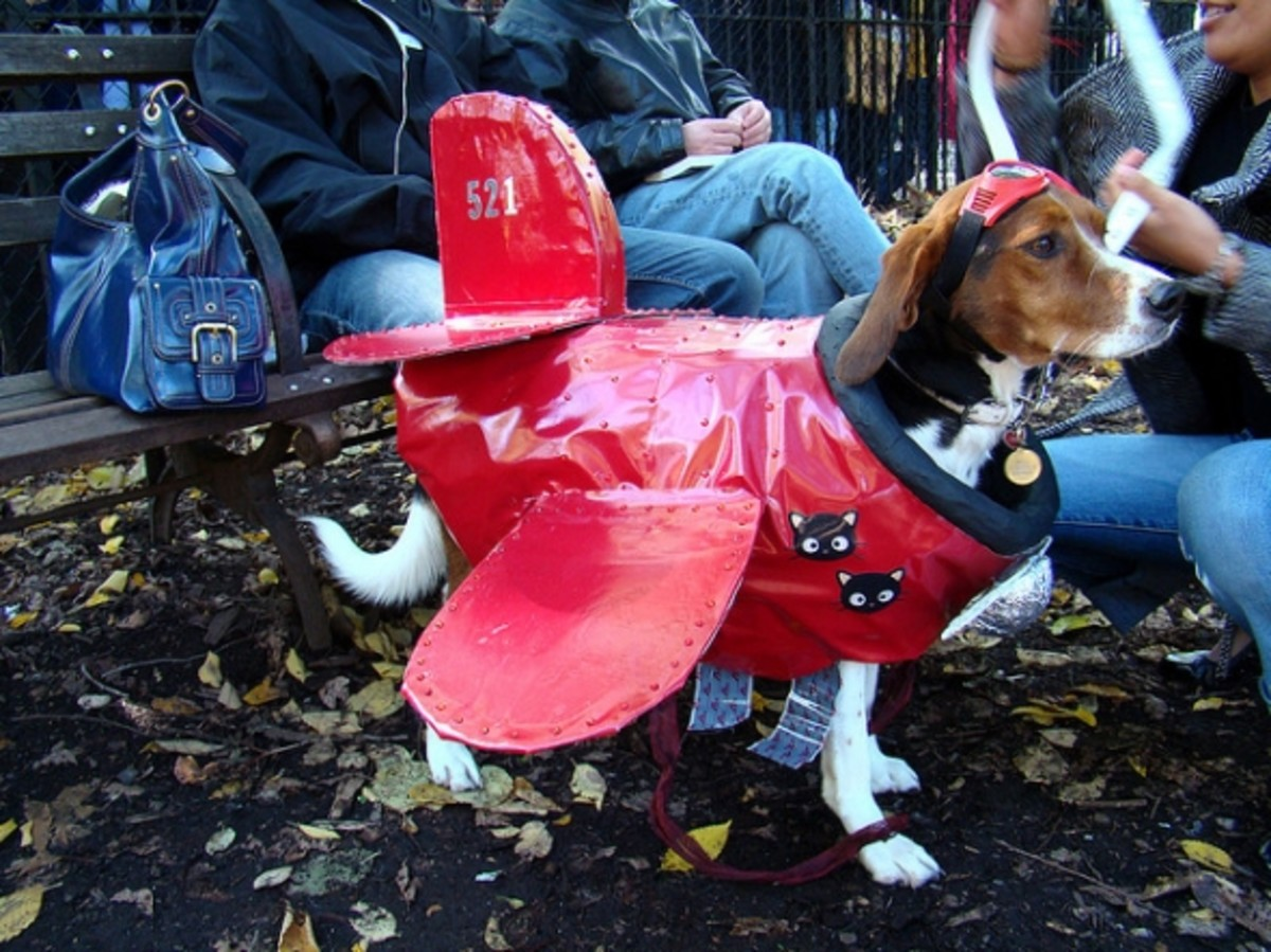 funny-fancy-dress-costume-ideas-for-pets-diy-homemade-buy