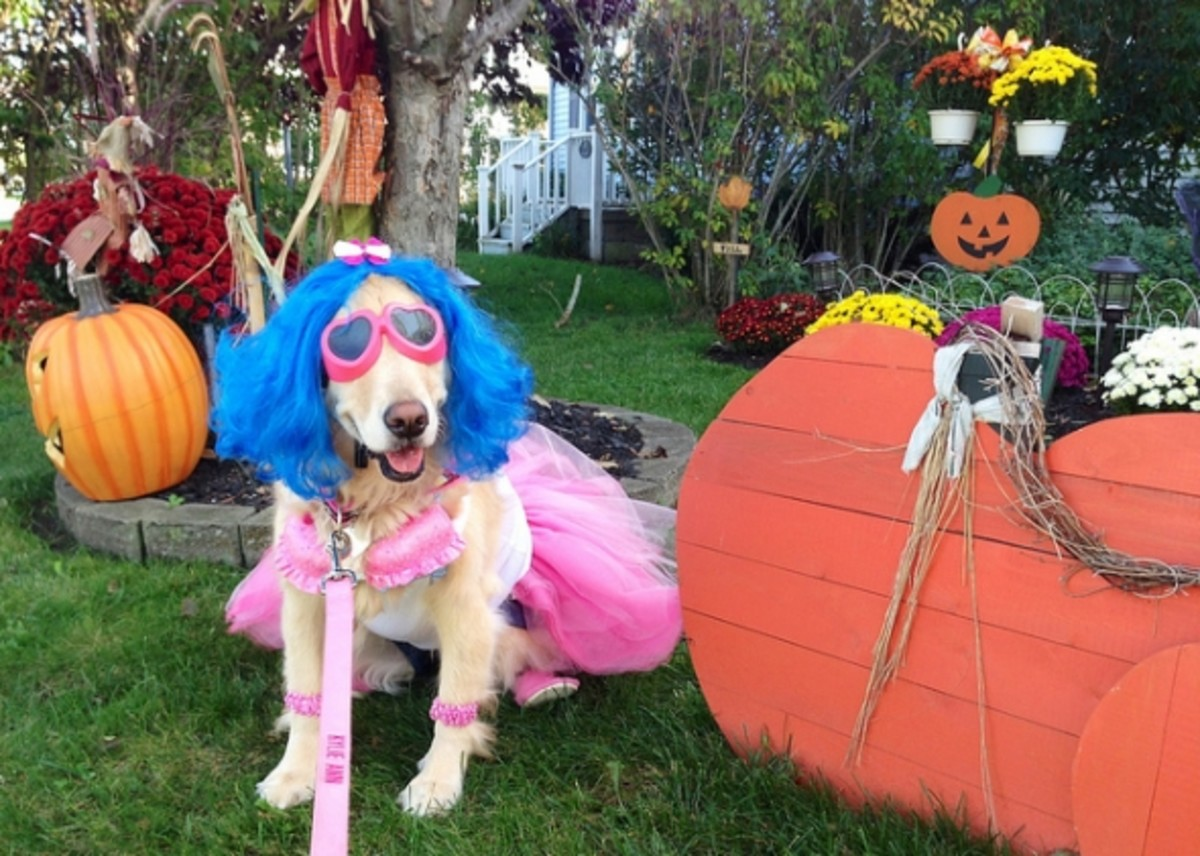 A 'Californian Girl' decked out in denim shorts, pink tutu, blue wig and cupcake bra!