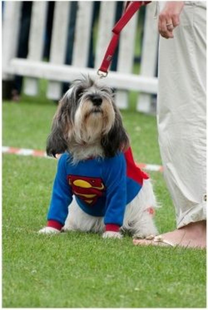 ★ Halloween Fancy Dress for Dogs | Homemade & DIY Costume Ideas ★