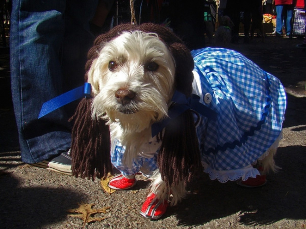 Complete with ruby red slippers!