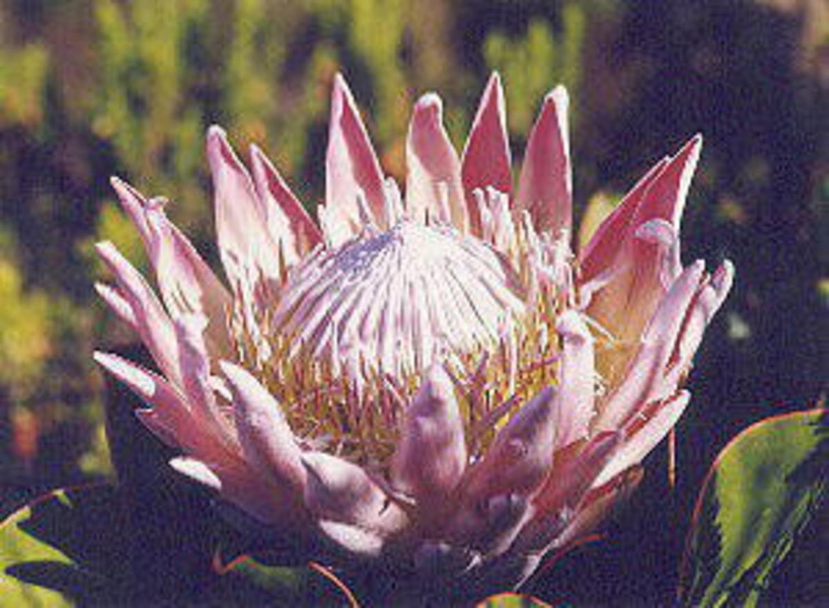 Image SA Government website