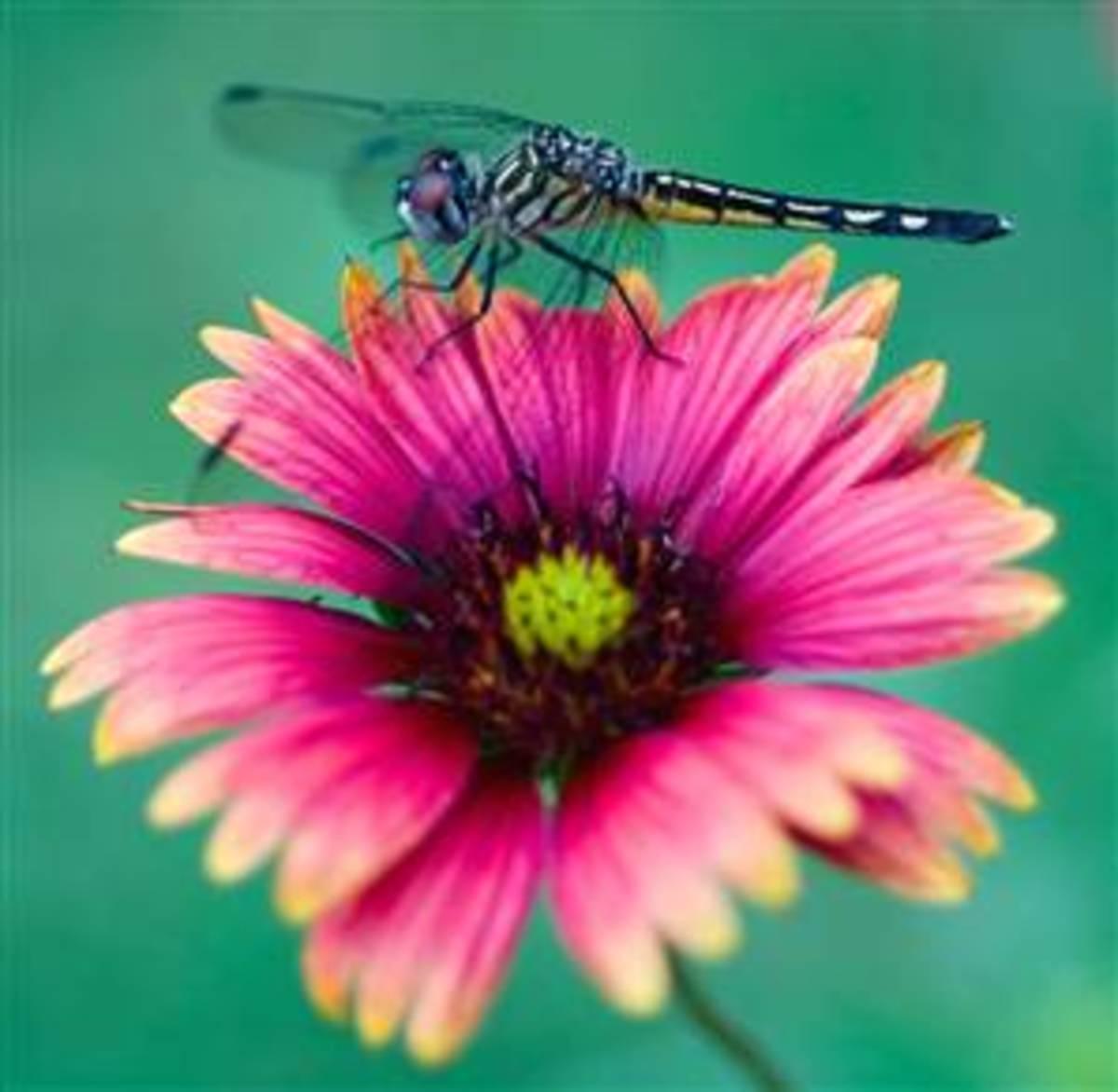 angel, flower, dragonfly