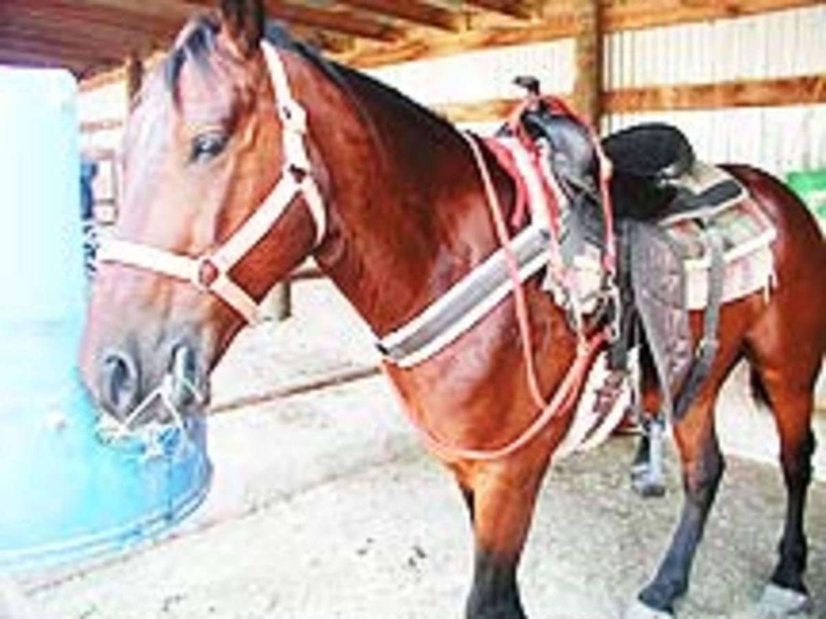 Horseback Riding at BLORA Belton Lake TX