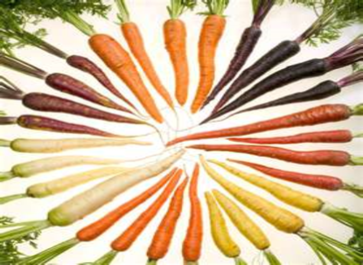 carrot-sayings-quotes-fun-facts-and-trivia
