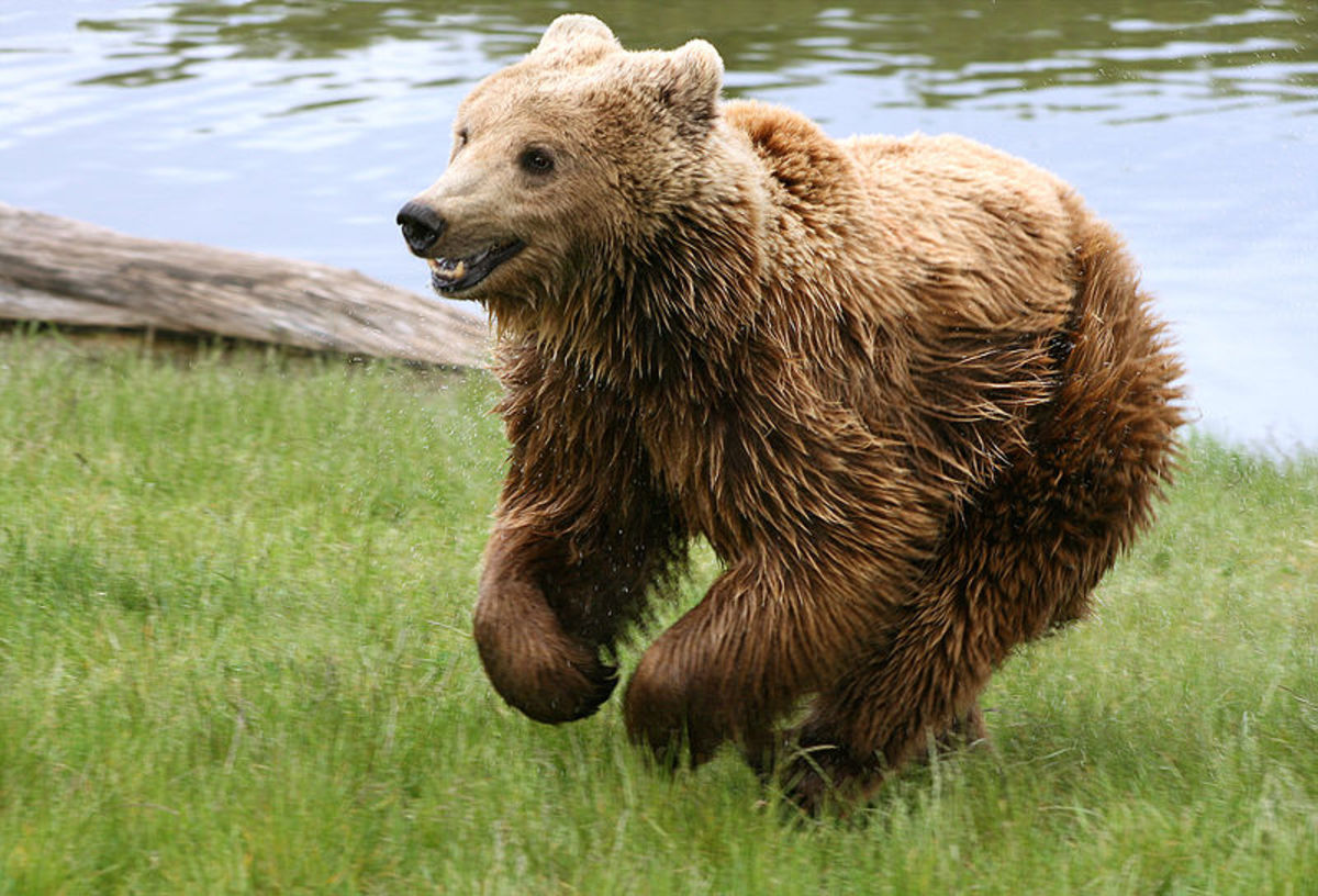 Look out for bears when the skirt length drops again!