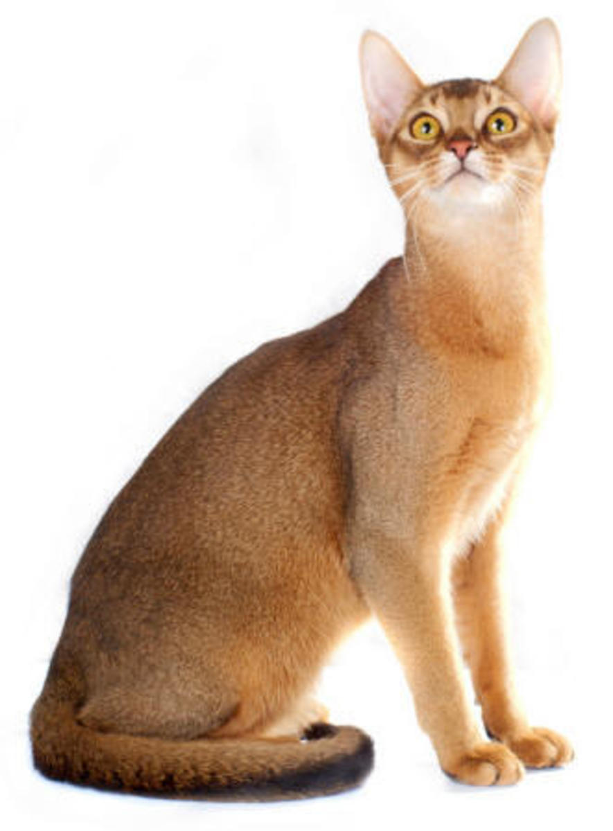 Popular Cat Breeds and Interesting Facts
