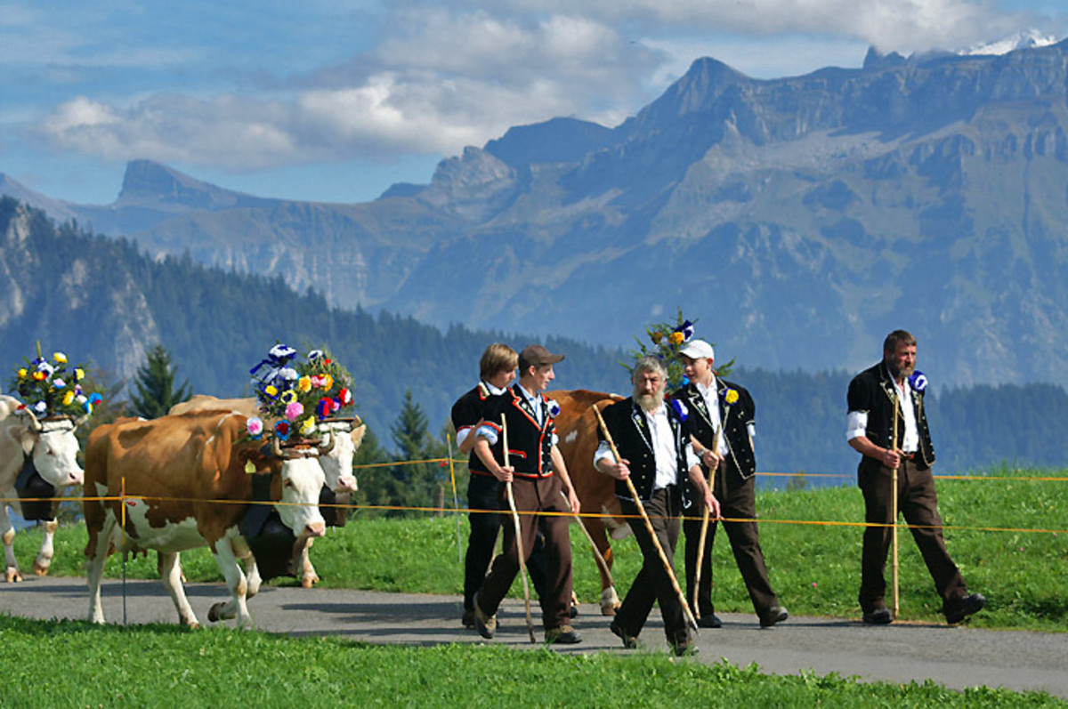 Alpabzug (the great trek back home from the summer pastures). Farmers, herdsmen and cows are dressed up for this special occasion.