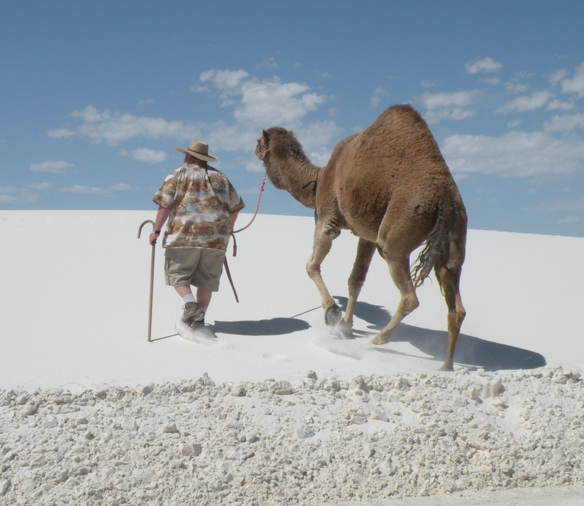 Matilda the Camel and her owner take a walk over the white gypsum dunes.