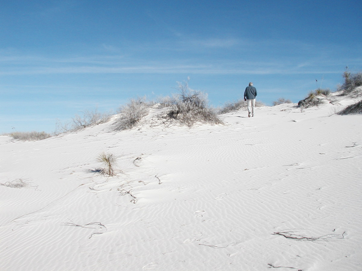 Some plants are hardy enough to survive in the gypsum dunes.