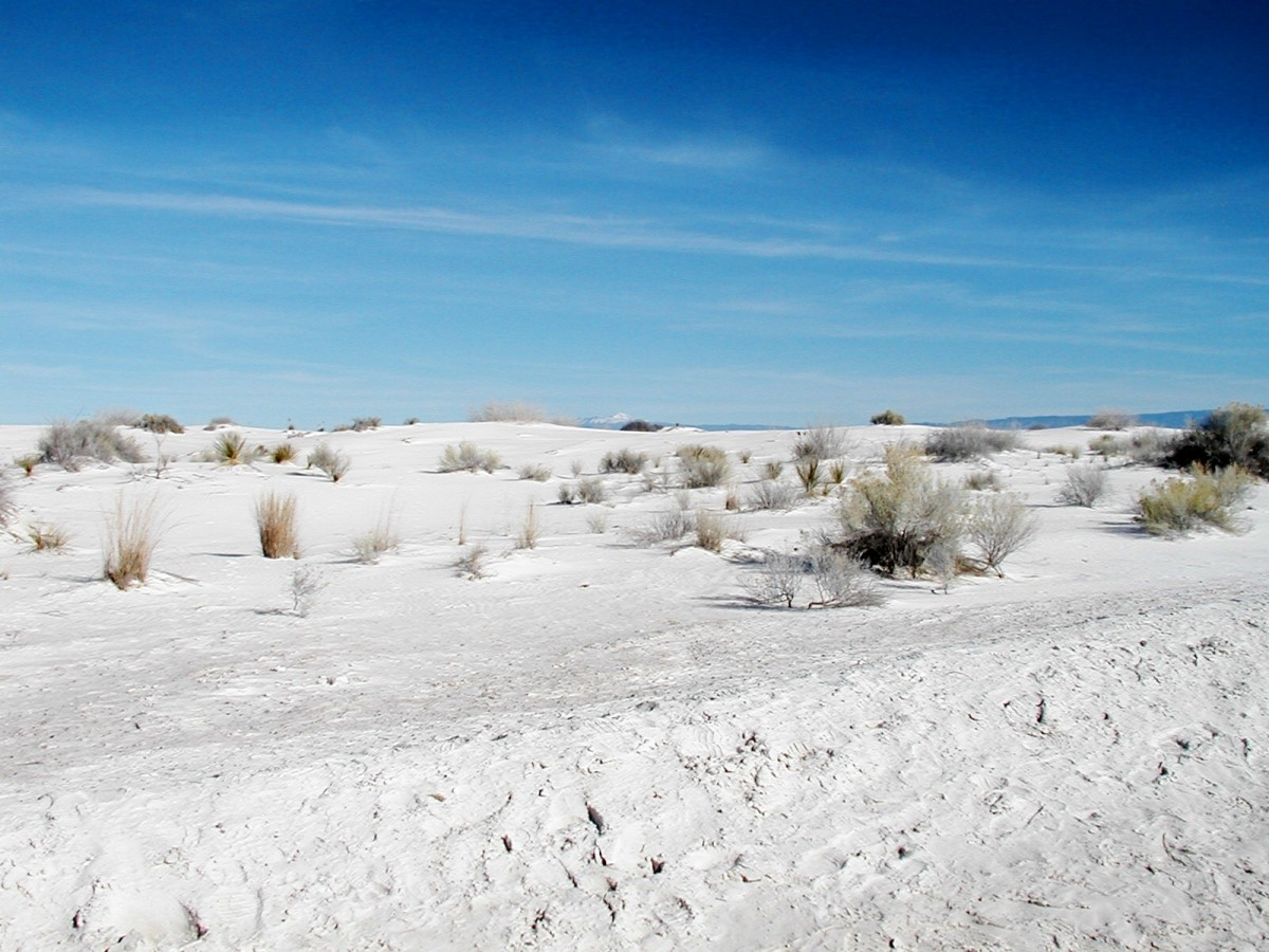 white-sands-national-monumentwhite-gypsum-sands-and-matilda-the-camel
