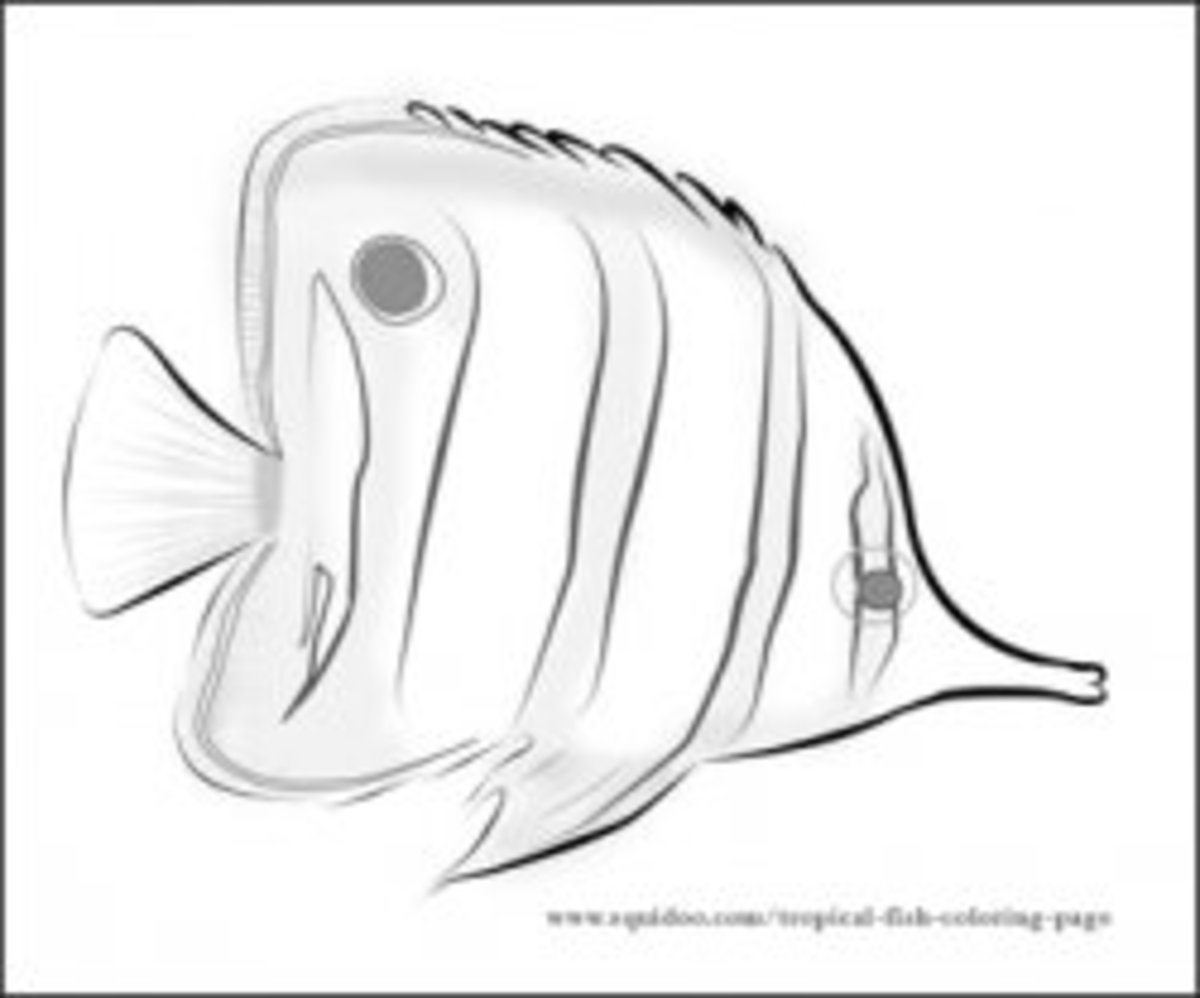 Butterfly Fish Coloring Page