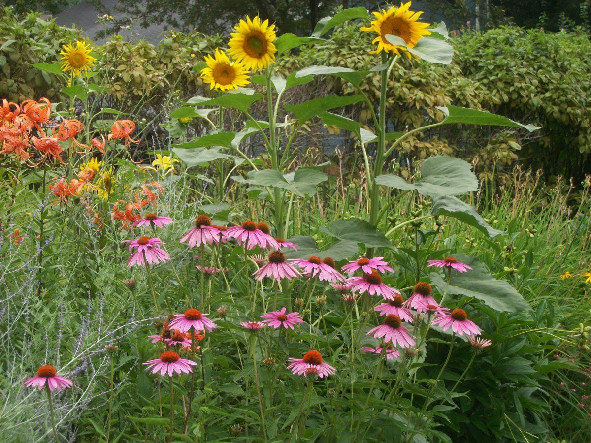 the-story-of-the-sunflower-garden