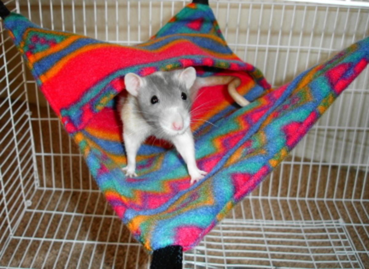 Как сшить гамак крысами 90