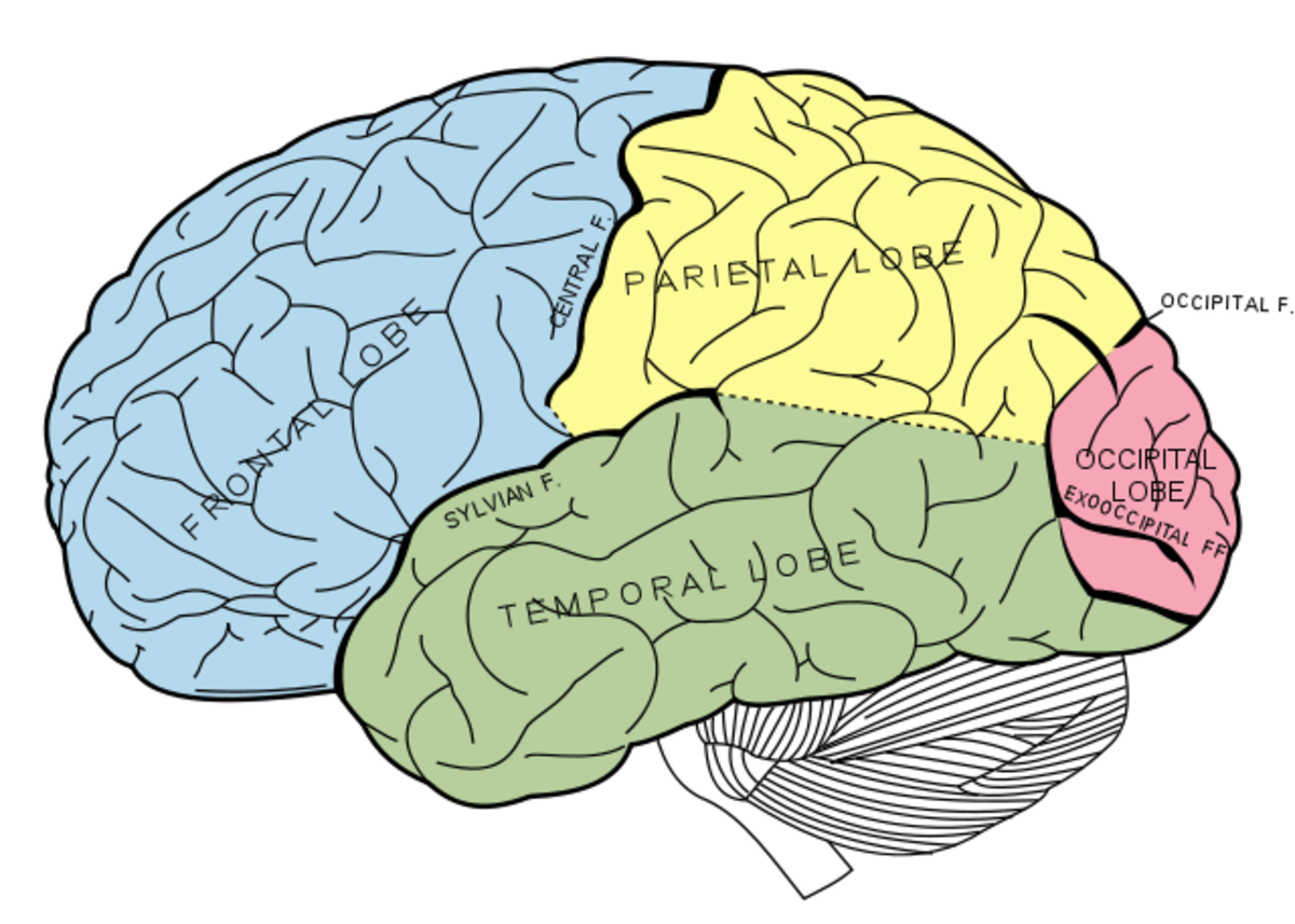 How memory works - What are the three memory stores and how to improve our memory