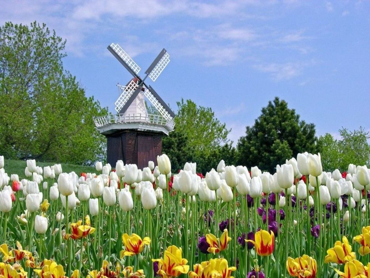 free cross stitch pattern Windmill with Tulips