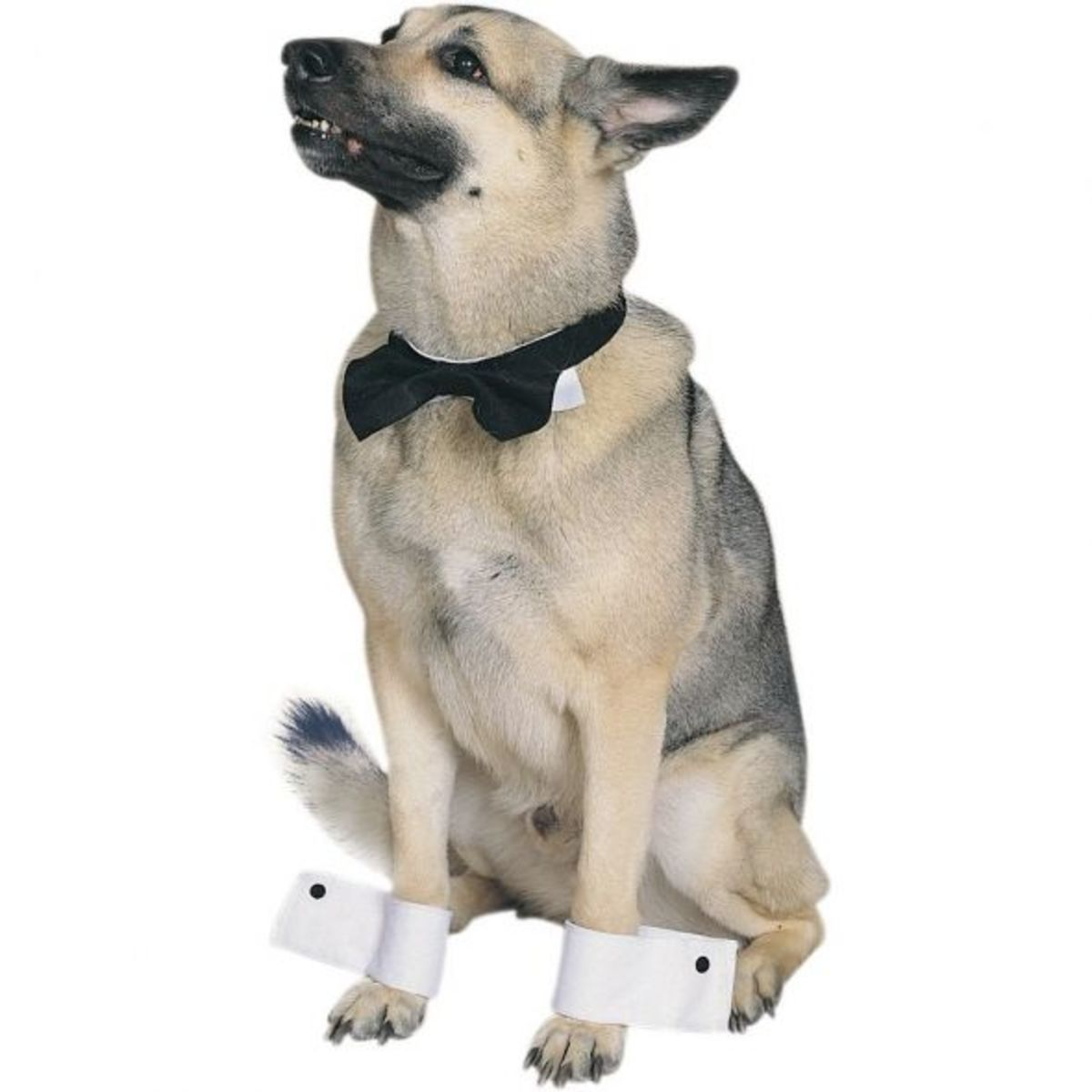 Tuxedo Dog Collar - Dress Your Pooch in Style - Perfect for Weddings
