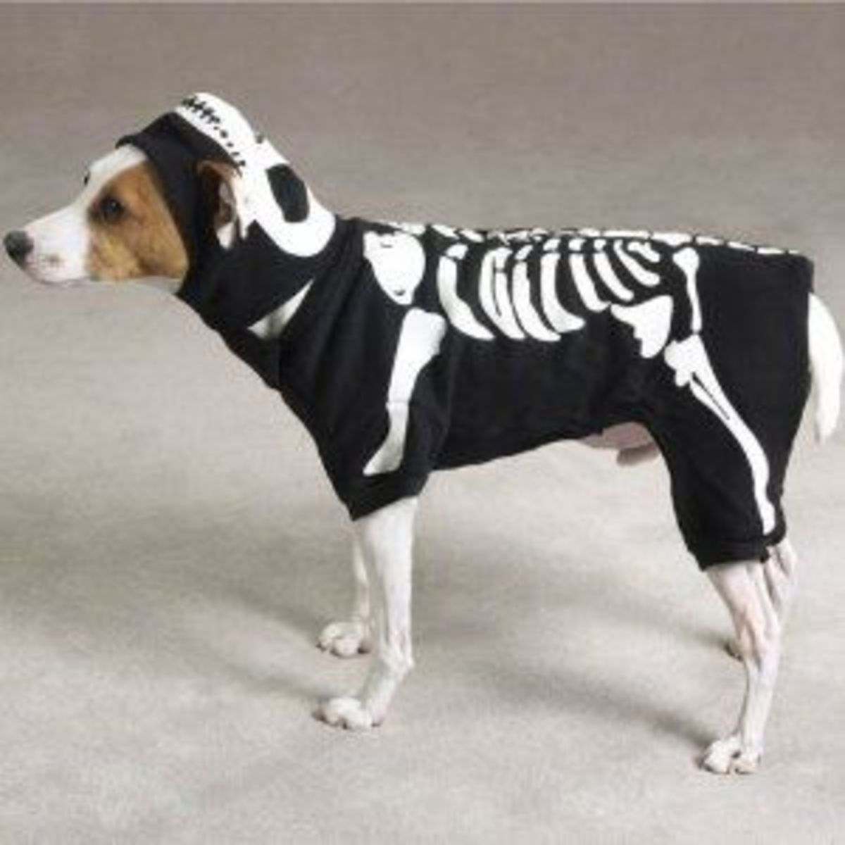 Casual Canine Glow Bones Costume Xlg