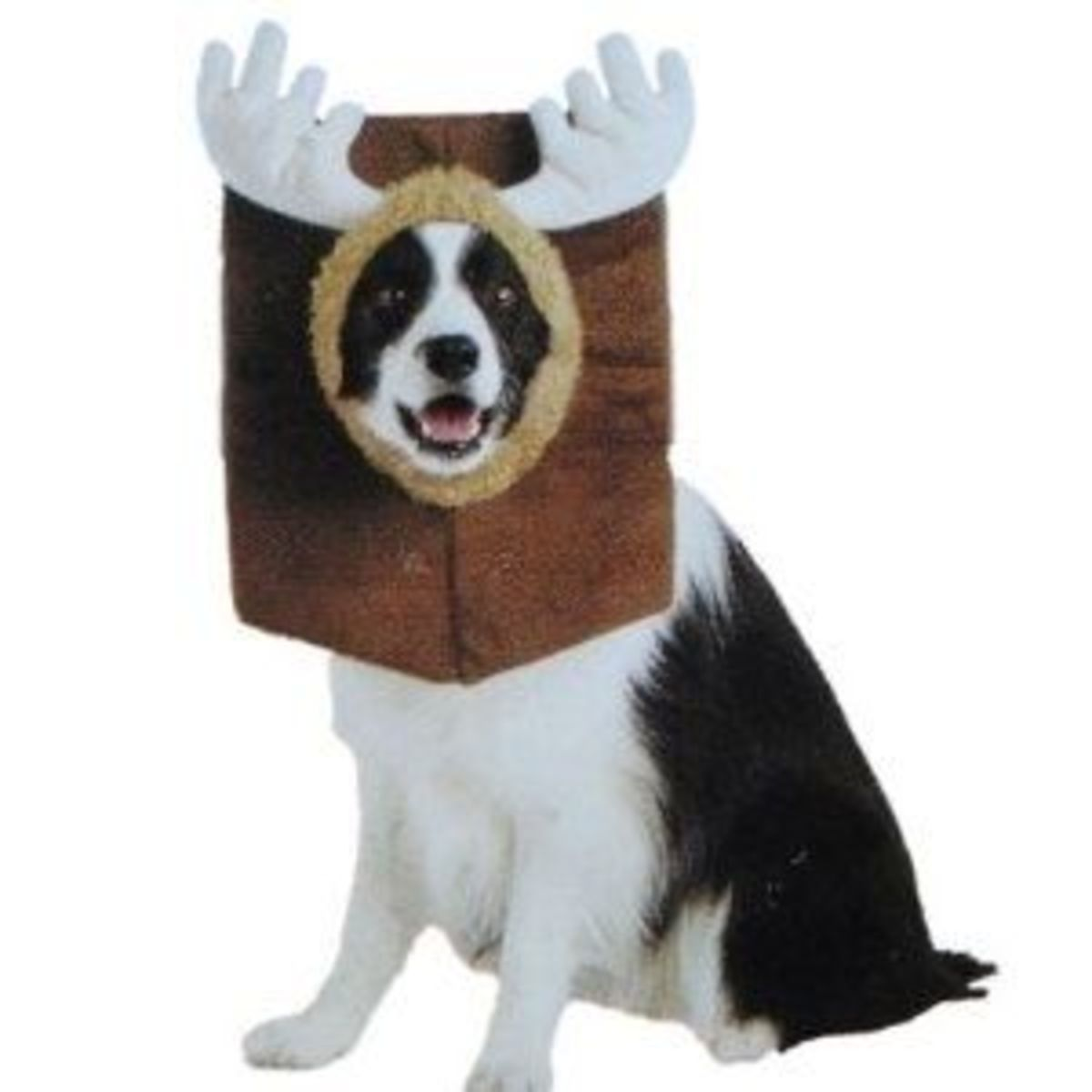 Big Dog Costumes On Parade