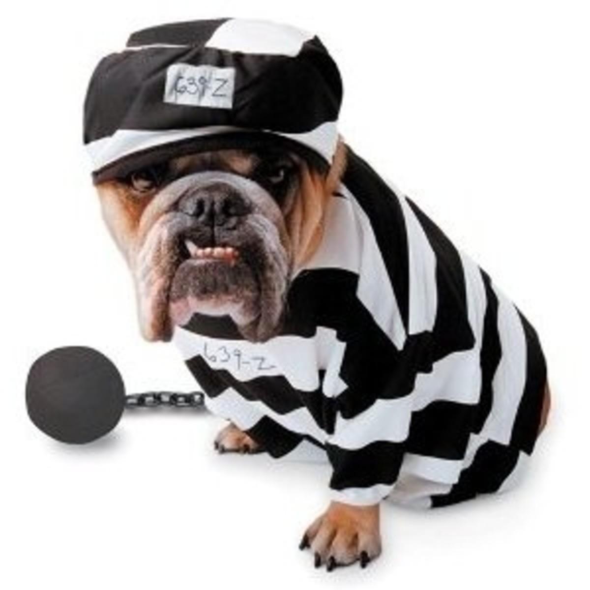 Zelda TM - Prisoner Pet Costume Large