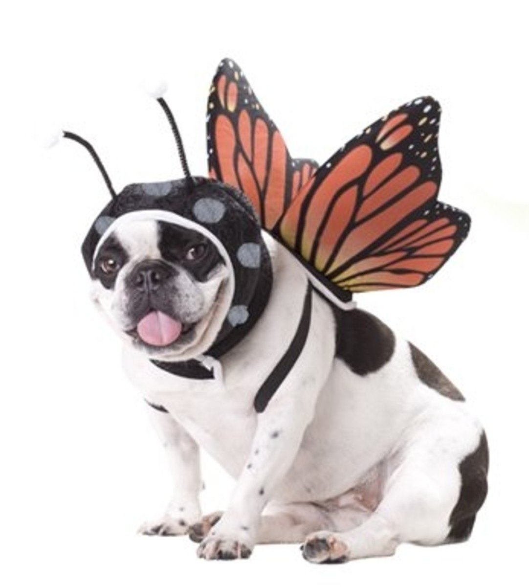 Animal Planet Monarch Butterfly Dog Halloween Costume with Wings & Antennae Headpiece Medium