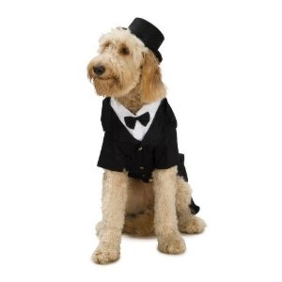 Dapper Dog Tuxedo X-Large Pet Costume