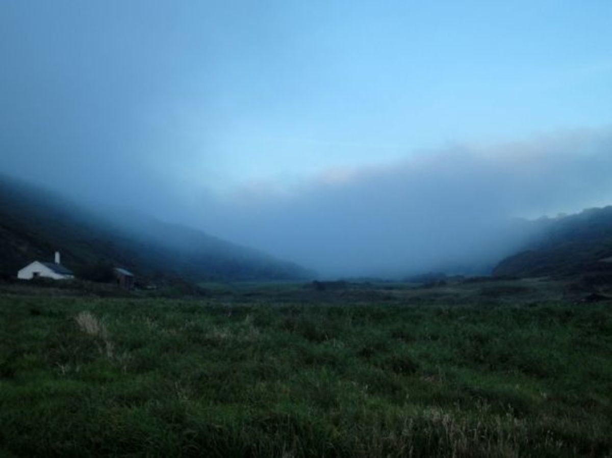 Fog in Devon