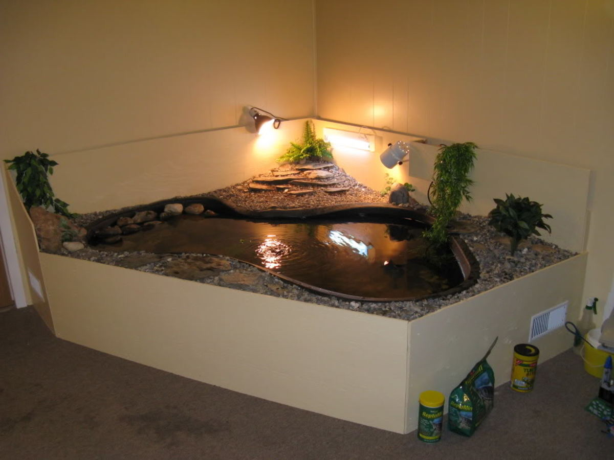 Housing the Aquatic Turtle | HubPages