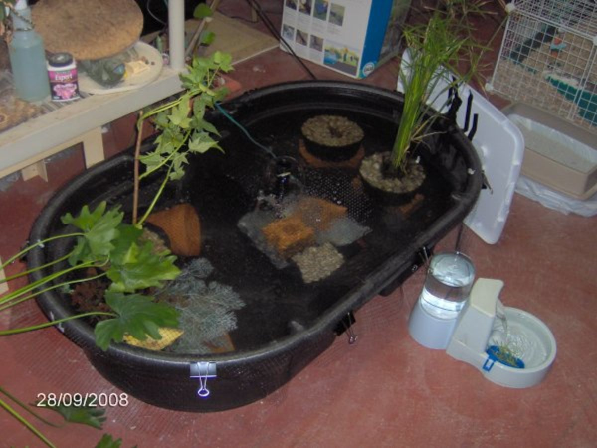 Housing the aquatic turtle hubpages for Filter for 100 gallon pond