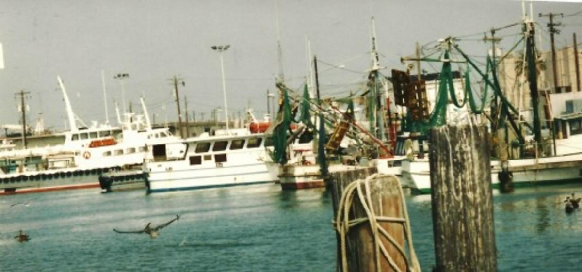 Pelicans seen near shrimp boats in Galveston, Texas.