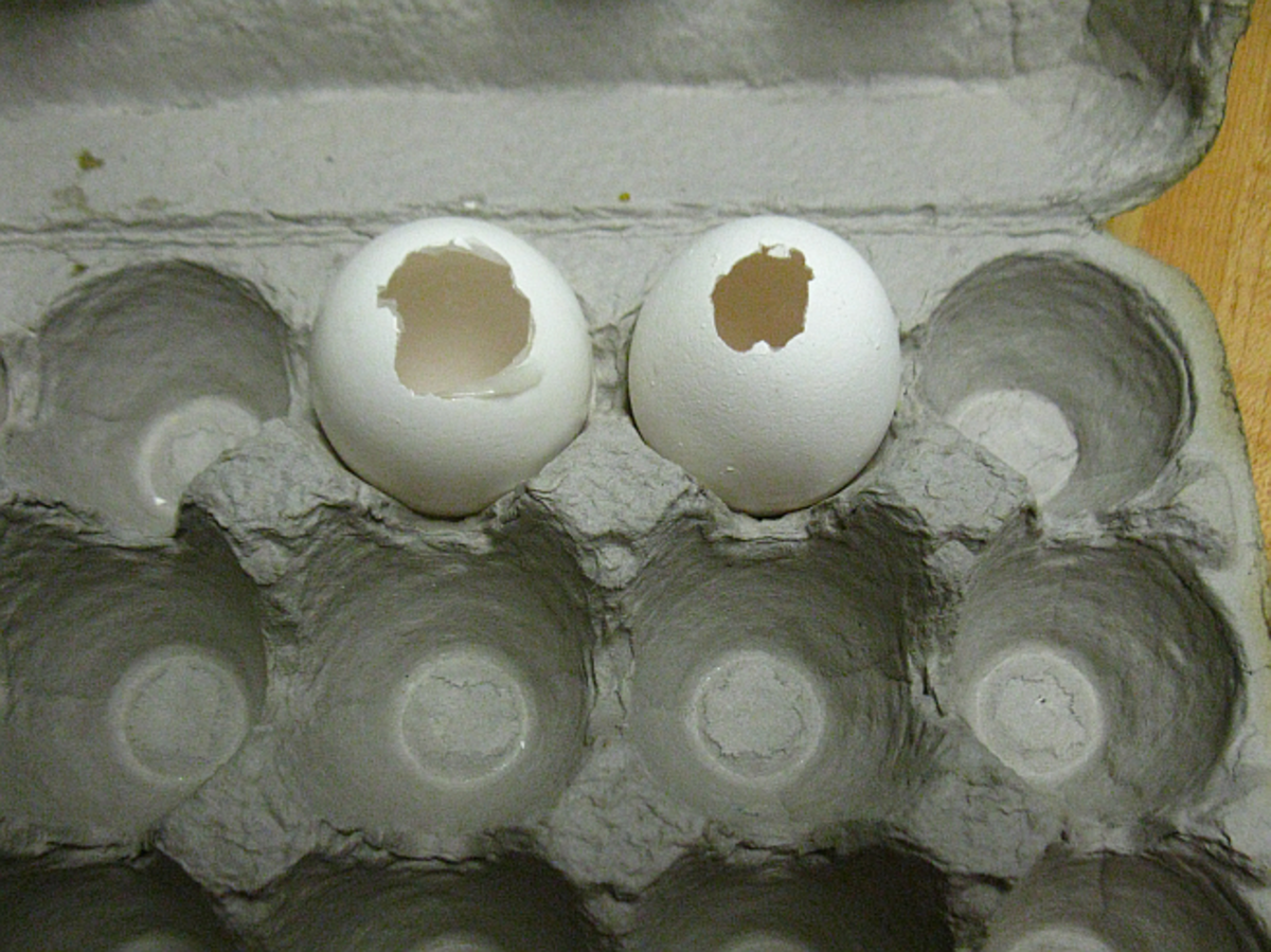 clean shells drying