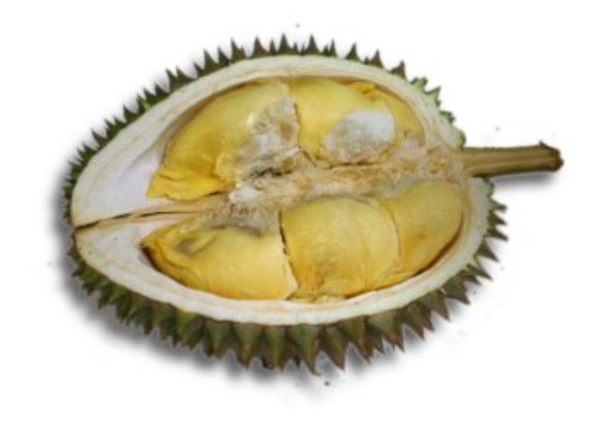 A durian cut open to reveal its soft, ripe, stinky flesh.