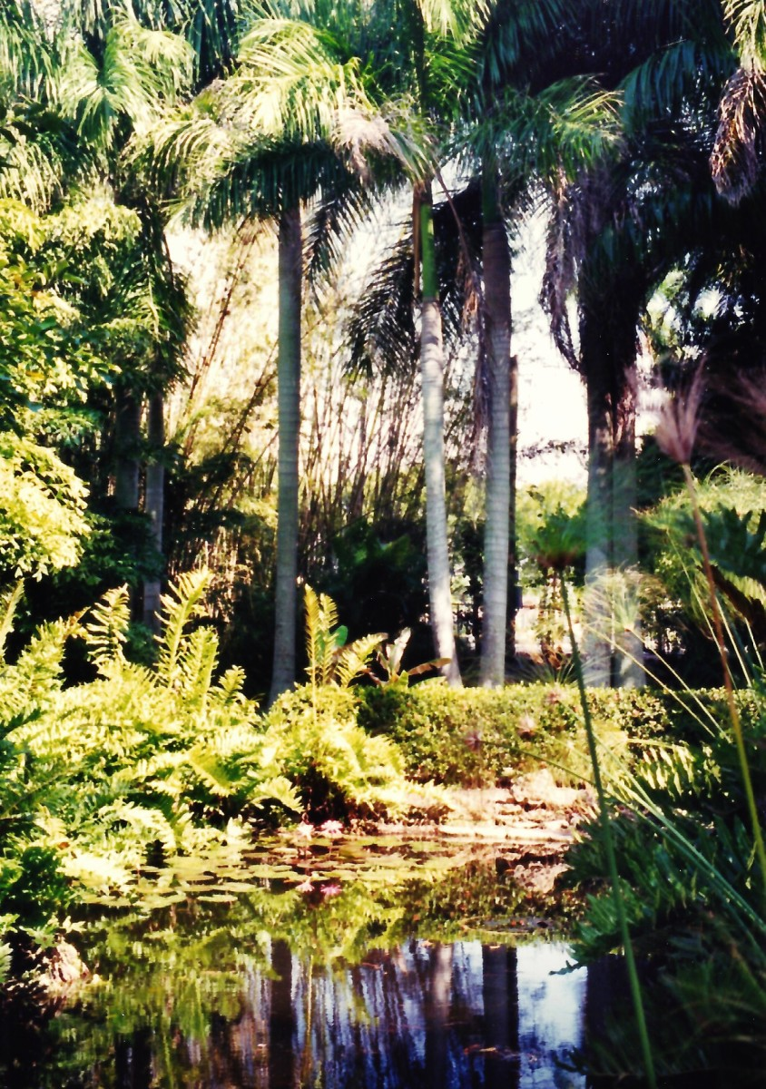 Lush gardens at the Edison & Ford winter homes in Fort Myers, Florida